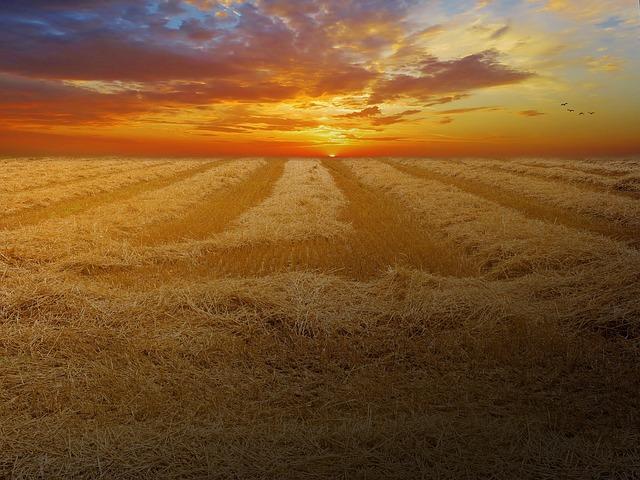 Le blé F2010