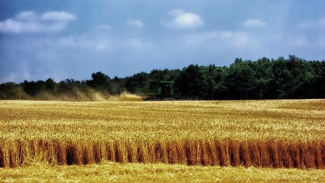 Le blé F2410