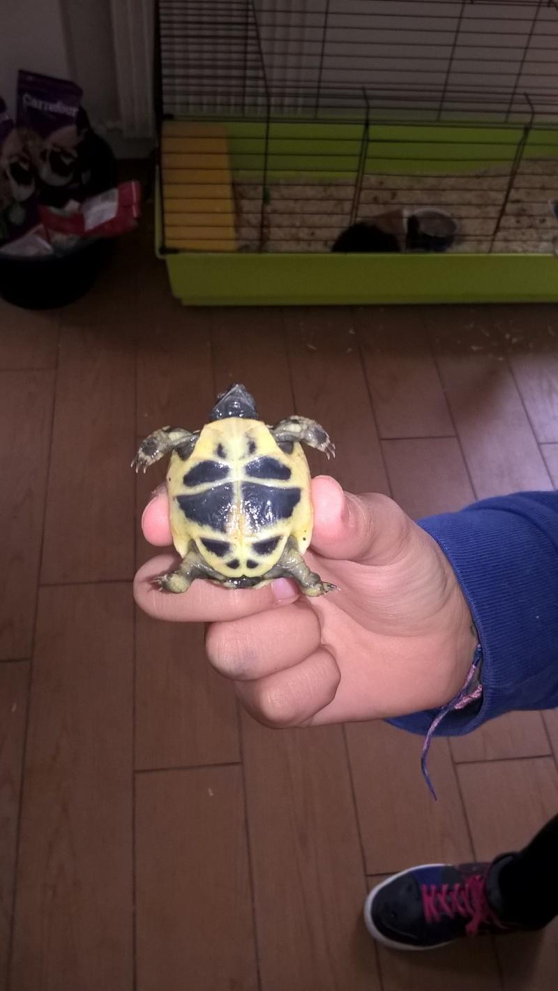 tortue à  identifié  Fot8b510