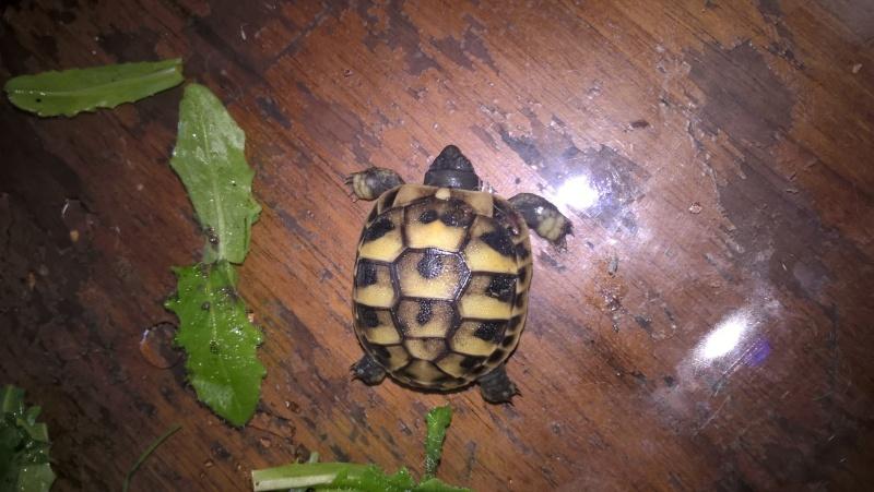 tortue à  identifié  Fotdd610