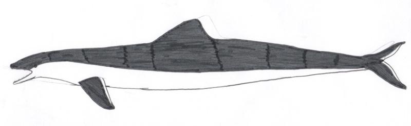 Riesenschweinswal Alex0812