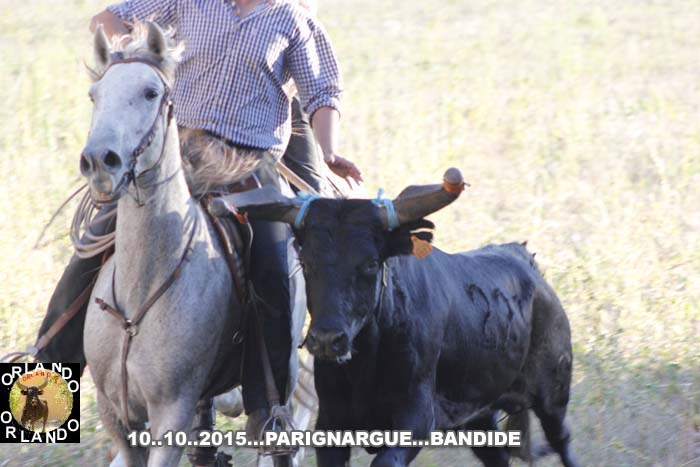 Bandide  du  10..10..2015... Parignargue  _mg_0023