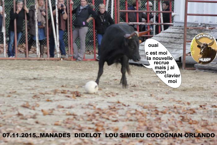 07...11...2015    CODOGNAN  ENCIERO  COURSE AU PLAN _mg_0033
