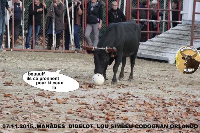 07...11...2015    CODOGNAN  ENCIERO  COURSE AU PLAN _mg_0035