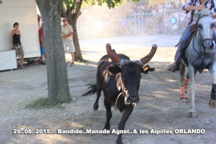29...08..2015...Bandide Manades  AGNIEL 1 les ALPILLES Img_0210