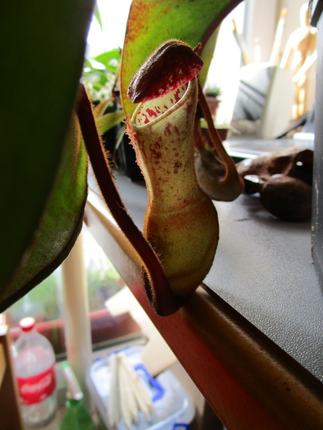 Galerie Nepenthes Img_3410