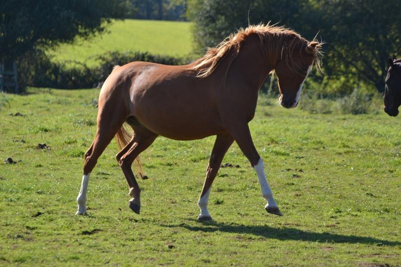 Heldon, PSAR ataxique, un cheval que l'on vouvoie Dsc_0614