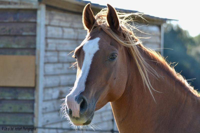 Heldon, PSAR ataxique, un cheval que l'on vouvoie Dsc_0615