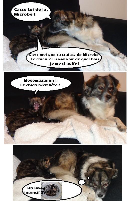 MYSTIQUE (ex-ONDINE) - chatte femelle, née 2014 - (PASCANI) - adoptée par Emilie B. (dpt 69) - Page 4 Zet310