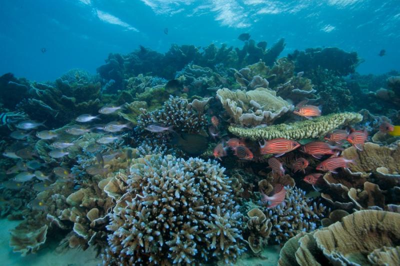 nourrir ces coraux Coraux10
