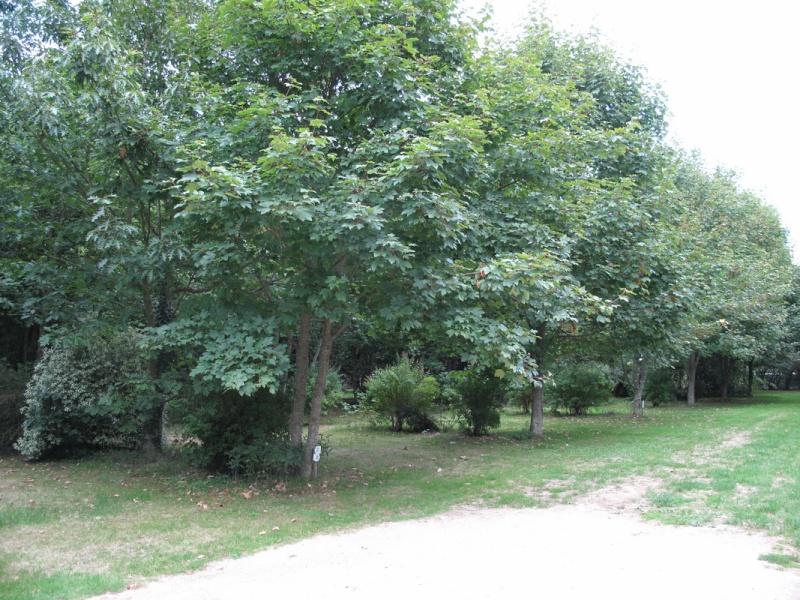 "Le camping ""la fontaine du Hallate""  (56) Emplac11"