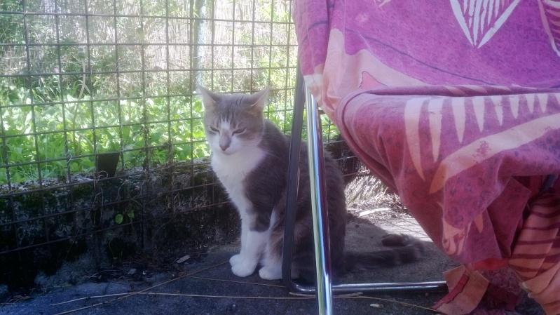 Faire rentrer un chat à l'intérieur Photos12