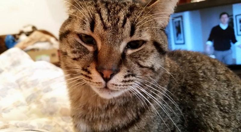BUFFY, chat femelle, née env. 2013, refuge de Alina et Anda - prise en charge par une autre association Buffy110