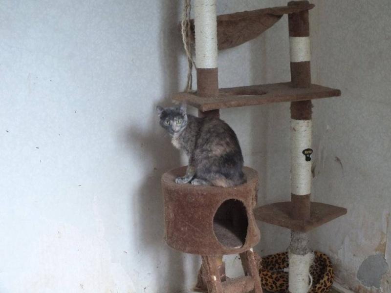 ELECTRA, chat femelle, née 2012-2013, refuge de Anda et Alina - prise en charge par une autre association Elec510