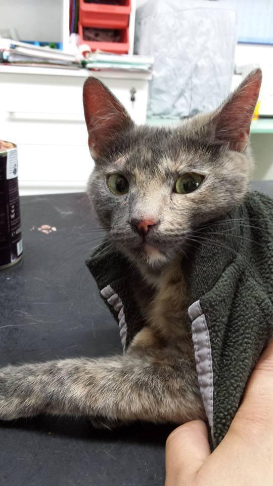 ELECTRA, chat femelle, née 2012-2013, refuge de Anda et Alina - prise en charge par une autre association Electr10