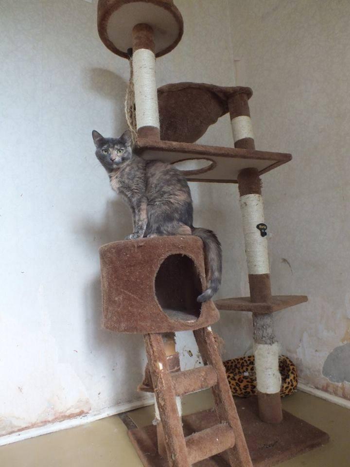 ELECTRA, chat femelle, née 2012-2013, refuge de Anda et Alina - prise en charge par une autre association Electr11