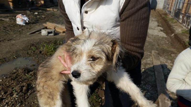 TARZAN, chiot mâle, né env. mai 2015, refuge de Alina & Anda, DECEDE Tar310