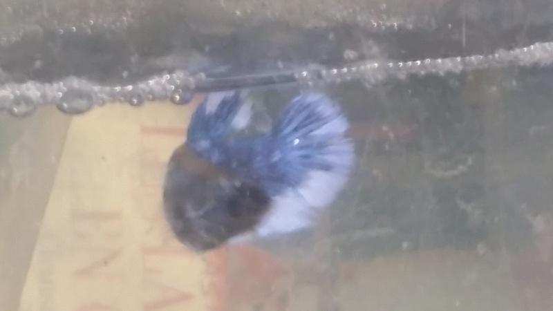Nouvelle femelle!!! 20151016