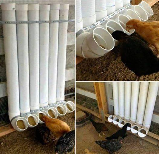 Idées et astuces pour oiseaux 11204910