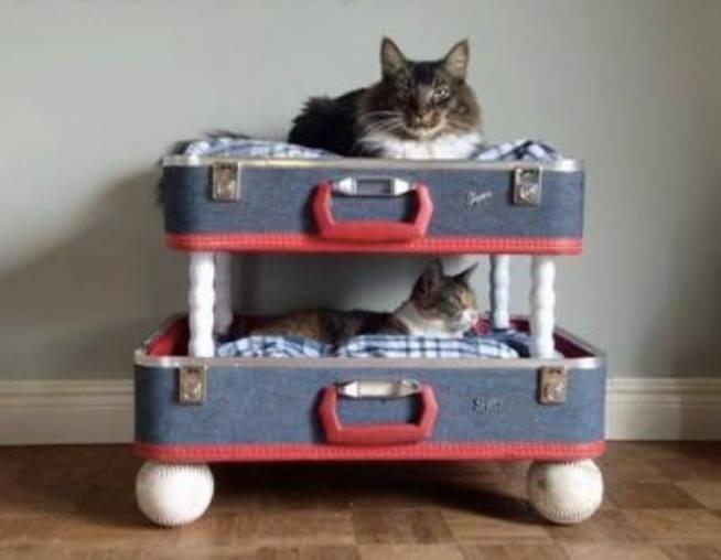 Idées et astuces pour Chiens et chats! 11933310