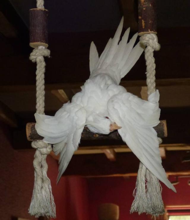 Idées et astuces pour oiseaux 12074710