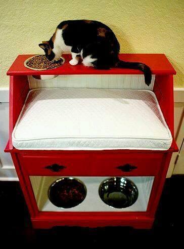 Idées et astuces pour Chiens et chats! 12112410