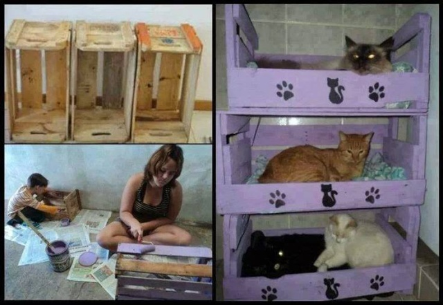 Idées et astuces pour Chiens et chats! 12143312
