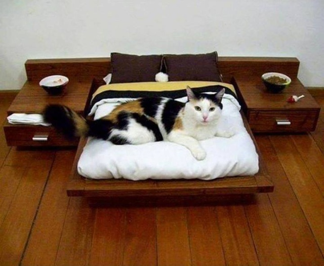 Idées et astuces pour Chiens et chats! 12196013