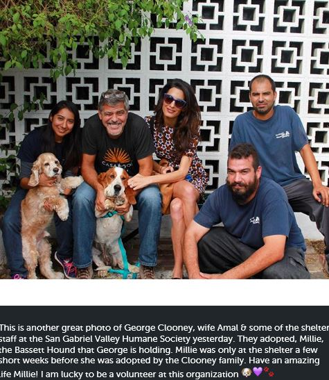 George Clooney and Amal adopted another dog today October 29 2015 Dd511