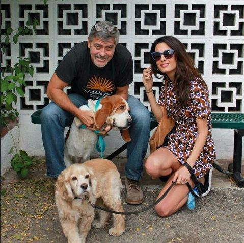 George Clooney and Amal adopted another dog today October 29 2015 Hh210