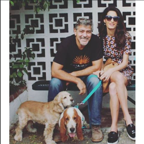 George Clooney and Amal adopted another dog today October 29 2015 Hh310