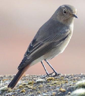 Identification oiseau  2015-110