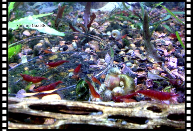 Gozgull Shrimp's - Page 9 Img_2013