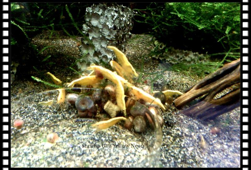 Gozgull Shrimp's - Page 9 Img_2020