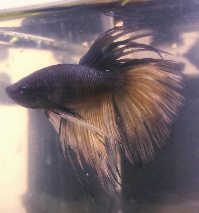 Blackfish mon CT coup de coeur Imag7710