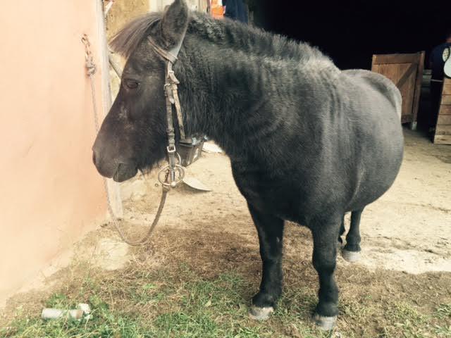KIWI et CAPUCINE (décédée) - ONC poney présumées nées en 1990 - adoptées en octobre 2008 par caro38 - Page 2 Unname48