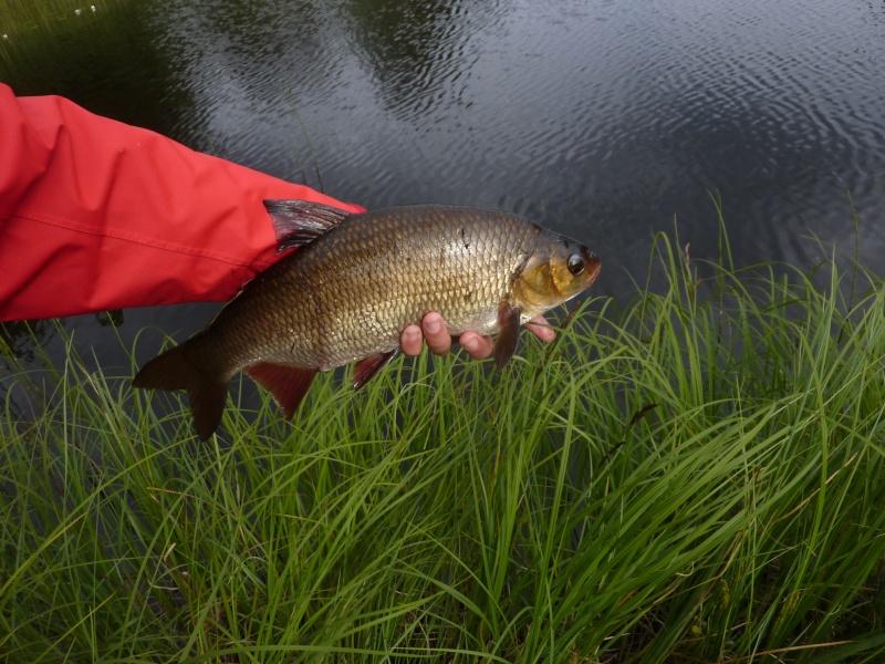 Séjour Suède et blog : Fishing Aventures  P1060312