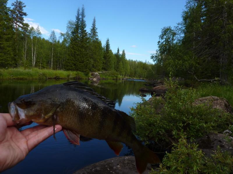 Séjour Suède et blog : Fishing Aventures  P1060414