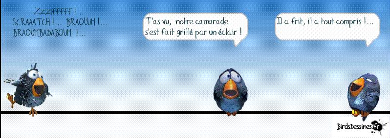 3ème rafale de birds 2015 ? Gg10