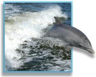 Delfine, das ist meine Idee Daniel10