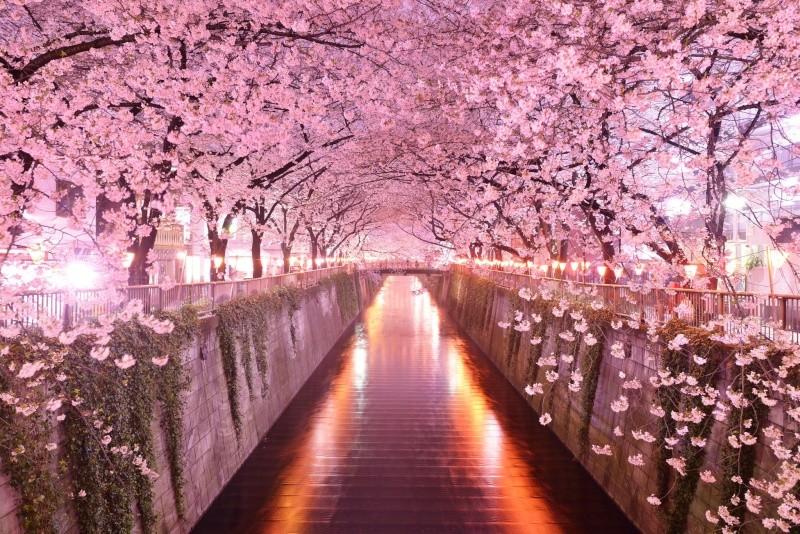 """Avatars """"Fêtes à l'étranger"""" Sakura11"""