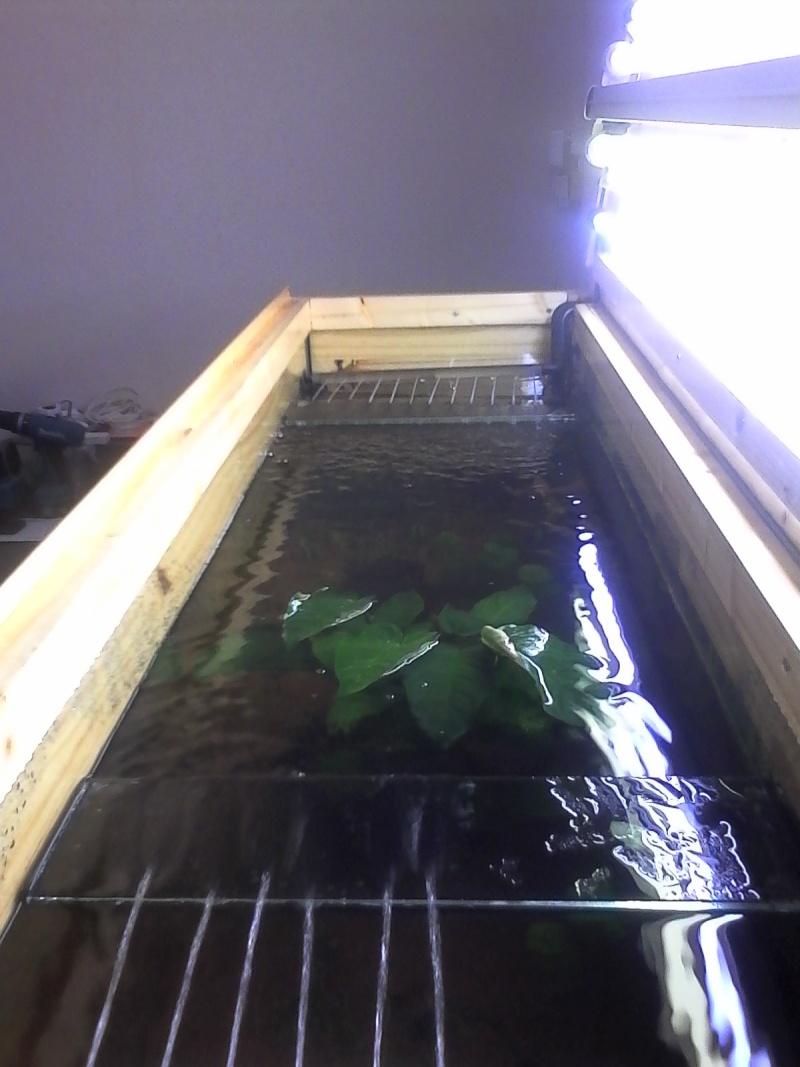 présentation aquarium 370L Img_2014