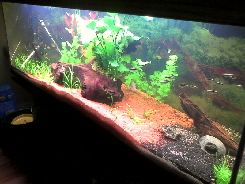 présentation aquarium 370L Img_2017