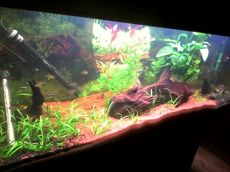 présentation aquarium 370L Img_2018