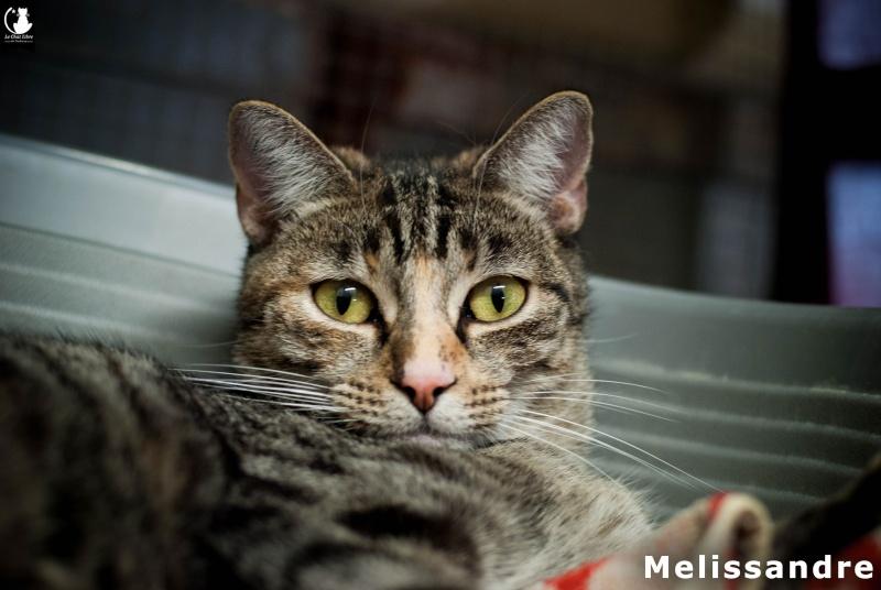 MELISSANDRE Meliss10