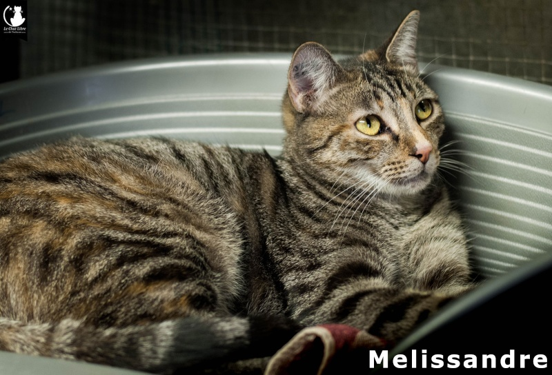 MELISSANDRE Meliss11