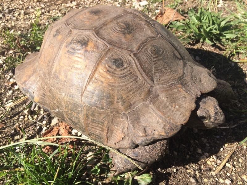 identifier notre tortue  Image10