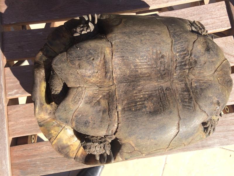 identifier notre tortue  Image11