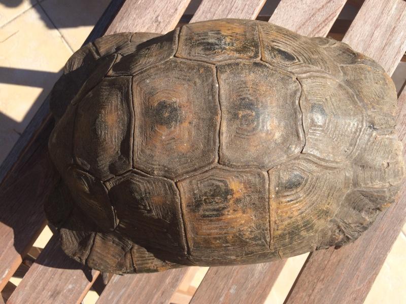 identifier notre tortue  Image13