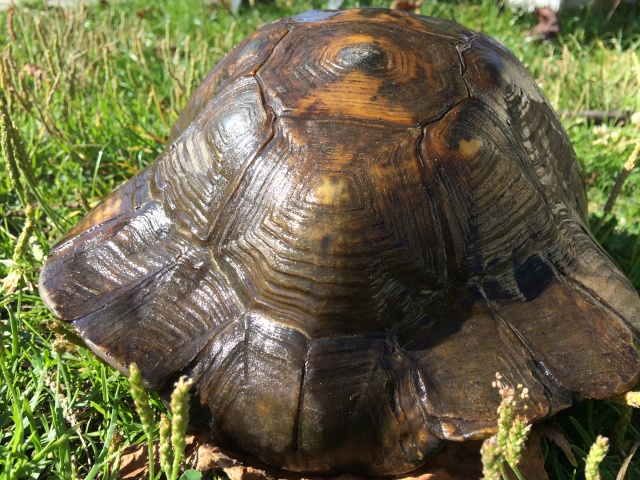 identifier notre tortue  Image17